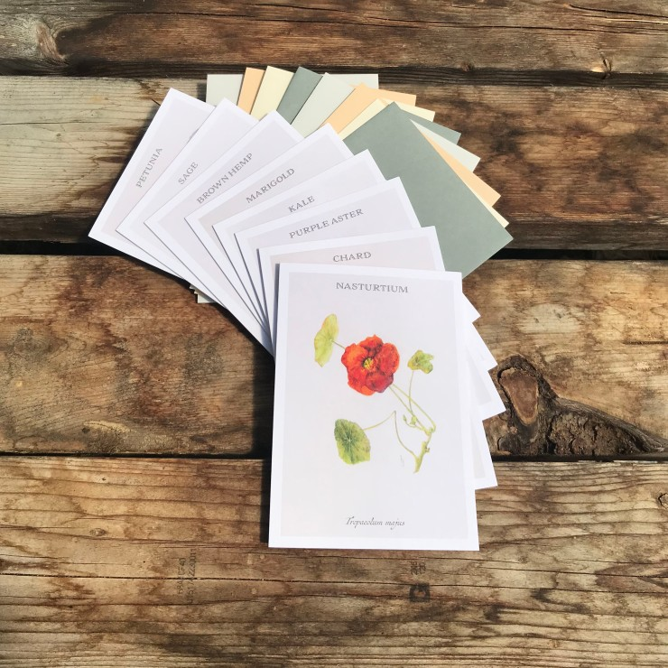 Botanical Drawing Note Cards
